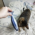 貓咪旺-貓薄荷大秋刀魚_191225_0018.jpg