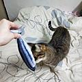 貓咪旺-貓薄荷大秋刀魚_191225_0019.jpg