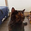 TUNDRA貓罐-野兔+雞肉200g_200425_0008.jpg