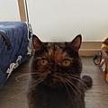 TUNDRA貓罐-野兔+雞肉200g_200425_0009.jpg