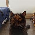 TUNDRA貓罐-野兔+雞肉200g_200425_0012.jpg