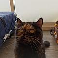 TUNDRA貓罐-野兔+雞肉200g_200425_0016.jpg