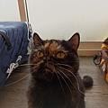 TUNDRA貓罐-野兔+雞肉200g_200425_0019.jpg