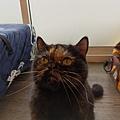 TUNDRA貓罐-野兔+雞肉200g_200425_0020.jpg