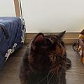 TUNDRA貓罐-野兔+雞肉200g_200425_0023.jpg