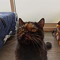 TUNDRA貓罐-野兔+雞肉200g_200425_0022.jpg