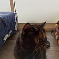 TUNDRA貓罐-野兔+雞肉200g_200425_0024.jpg