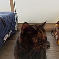 TUNDRA貓罐-野兔+雞肉200g_200425_0025.jpg