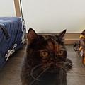 TUNDRA貓罐-野兔+雞肉200g_200425_0027.jpg