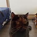 TUNDRA貓罐-野兔+雞肉200g_200425_0028.jpg
