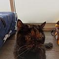 TUNDRA貓罐-野兔+雞肉200g_200425_0029.jpg