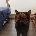 TUNDRA貓罐-野兔+雞肉200g_200425_0036.jpg