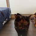 TUNDRA貓罐-野兔+雞肉200g_200425_0037.jpg