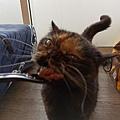 TUNDRA貓罐-野兔+雞肉200g_200425_0043.jpg