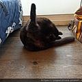 TUNDRA貓罐-野兔+雞肉200g_200425_0047.jpg