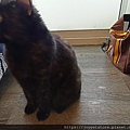TUNDRA貓罐-野兔+雞肉200g_200425_0050.jpg
