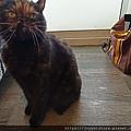 TUNDRA貓罐-野兔+雞肉200g_200425_0051.jpg