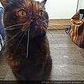 TUNDRA貓罐-野兔+雞肉200g_200425_0053.jpg
