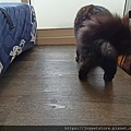 TUNDRA貓罐-野兔+雞肉200g_200425_0048.jpg