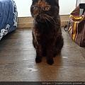 TUNDRA貓罐-野兔+雞肉200g_200425_0056.jpg