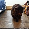 TUNDRA貓罐-野兔+雞肉200g_200425_0057.jpg