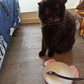 派樂鮮貓罐-北海道圓鱈(甲魚營養配方)80g_200425_0022.jpg