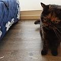 原點無穀全貓主食罐-羊肉3oz_200410_0001.jpg