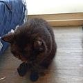 原點無穀全貓主食罐-羊肉3oz_200410_0006.jpg