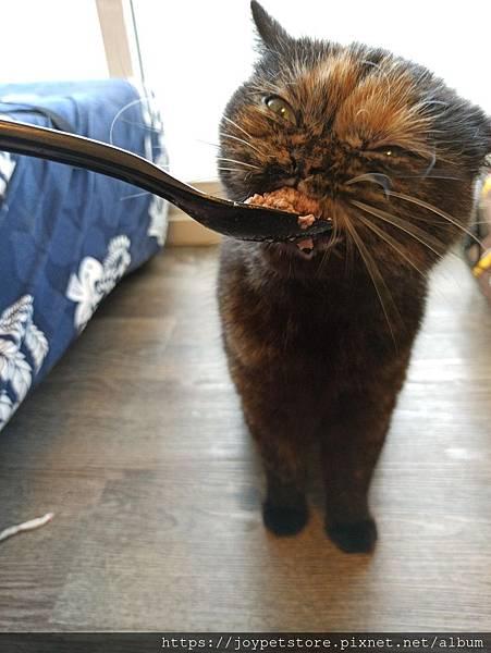 原點無穀全貓主食罐-羊肉3oz_200410_0014.jpg