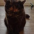 原點主食貓罐-皇極鮮雞3oz_200425_0001.jpg