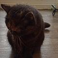 原點主食貓罐-皇極鮮雞3oz_200425_0005.jpg
