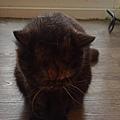 原點主食貓罐-皇極鮮雞3oz_200425_0006.jpg