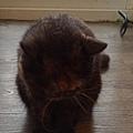 原點主食貓罐-皇極鮮雞3oz_200425_0007.jpg