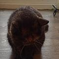 原點主食貓罐-皇極鮮雞3oz_200425_0008.jpg