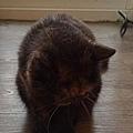 原點主食貓罐-皇極鮮雞3oz_200425_0011.jpg