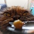 原點主食貓罐-皇極鮮雞3oz_200425_0016.jpg