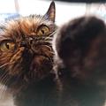原點主食貓罐-皇極鮮雞3oz_200425_0018.jpg