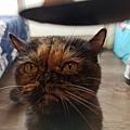 原點主食貓罐-皇極鮮雞3oz_200425_0019.jpg