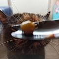 原點主食貓罐-皇極鮮雞3oz_200425_0021.jpg