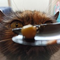 原點主食貓罐-皇極鮮雞3oz_200425_0022.jpg
