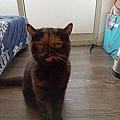 原點主食貓罐-皇極鮮雞3oz_200425_0023.jpg