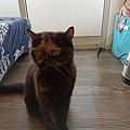 原點主食貓罐-皇極鮮雞3oz_200425_0024.jpg