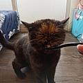 原點主食貓罐-皇極鮮雞3oz_200425_0033.jpg