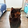 原點主食貓罐-皇極鮮雞3oz_200425_0039.jpg