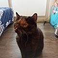 原點主食貓罐-皇極鮮雞3oz_200425_0041.jpg