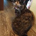 原點鮮食貓餐包-鮪魚3oz_200405_0001.jpg