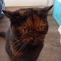 原點鮮食貓餐包-鮪魚3oz_200405_0004.jpg