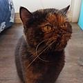 原點鮮食貓餐包-鮪魚3oz_200405_0008.jpg