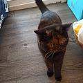 原點鮮食貓餐包-鮪魚3oz_200405_0011.jpg