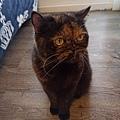 原點鮮食貓餐包-鮪魚3oz_200405_0014.jpg